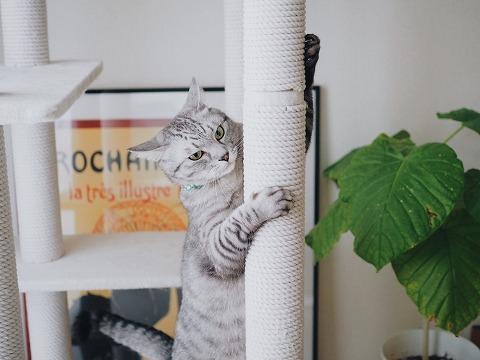 キャットタワーの支柱にしがみついているサバトラ猫