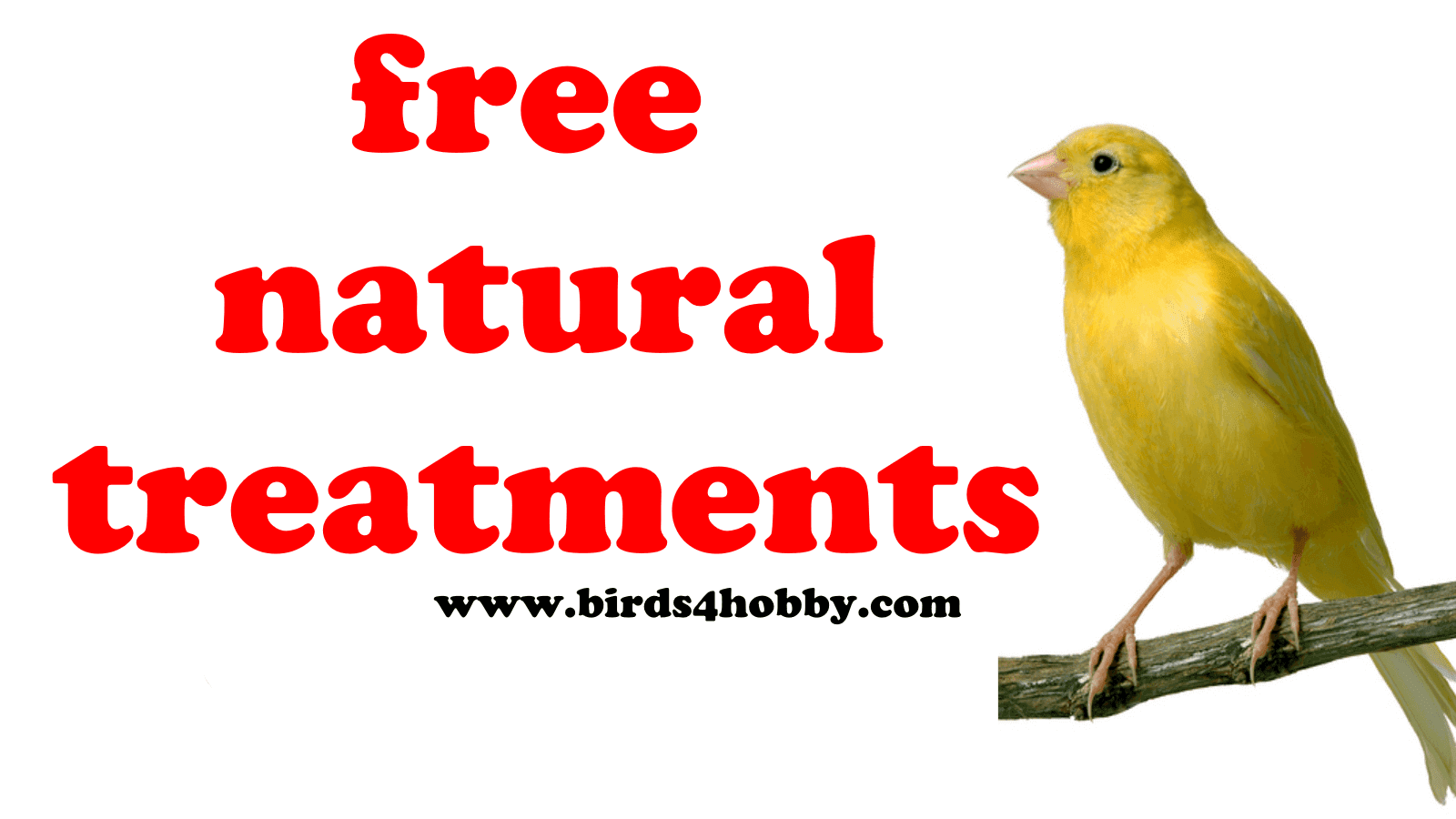 Free natural treatments for pets birds