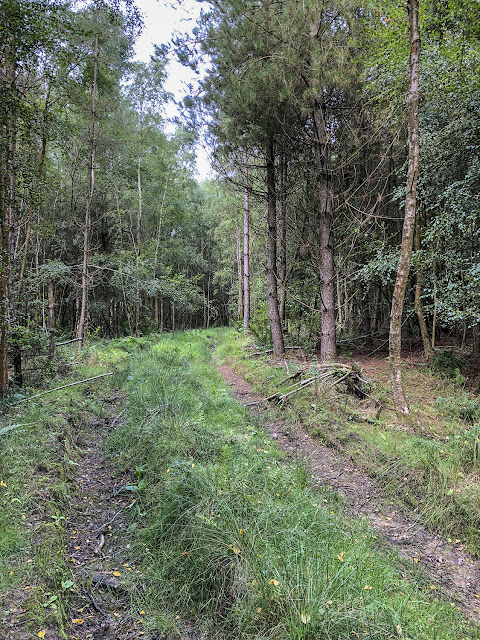 Track through the woods, Ashdown Forest, 22 August 2018.