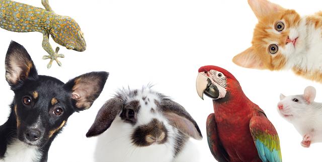 ingin-mulai-memelihara-hewan-berikut-5-hewan-yang-cocok-buat-kamu