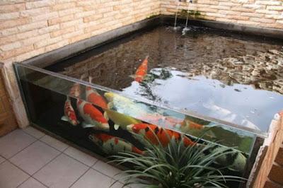 Kolam koi dengan kaca