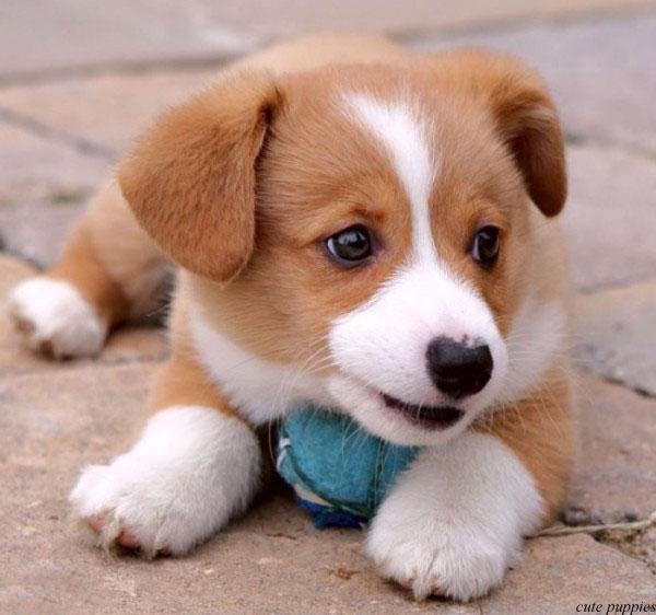 Cutest Dog Breeds Small Dog Breeds
