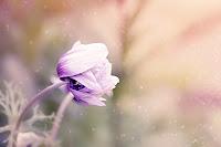 dio fede gesù fiore misericordia ricompensa dolcezza servi anima fiducia