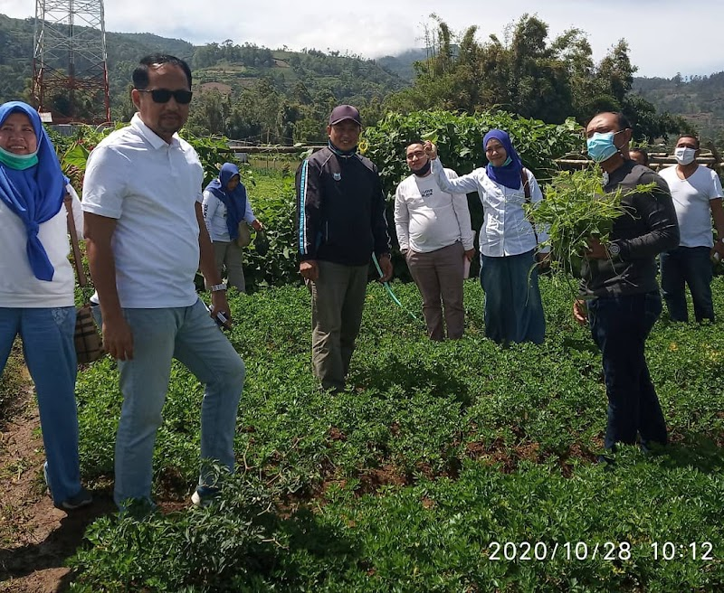 Momen Sumpah Pemuda, Rumah Koran dan Kadis Lingkungan Hidup Panen Sayur di Kampung Sayur