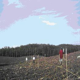 Gambar Pembuatan ajir pada lahan datar