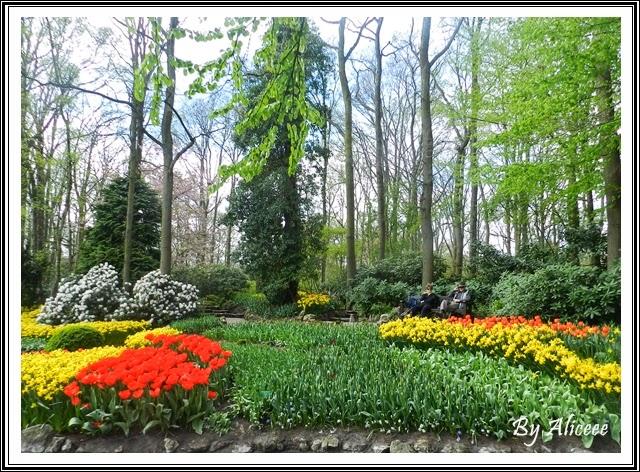lalele-keukenhof-garden