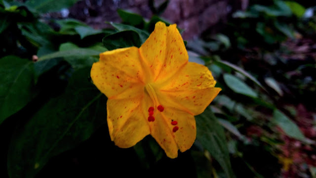 Wonderful Grass Yellow Flower   From'S Photography