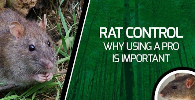 how to permanently remove rats from house pest removal rat rejection