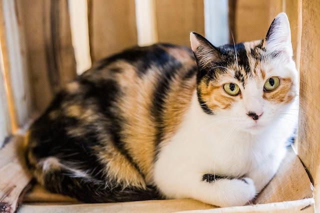 imagenes de gatos bonitos