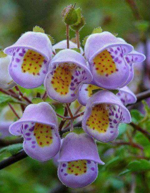Pictures Of Beautiful Rare Flowers