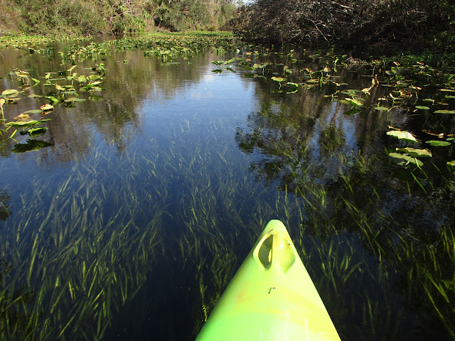 Where to Kayak in Orlando