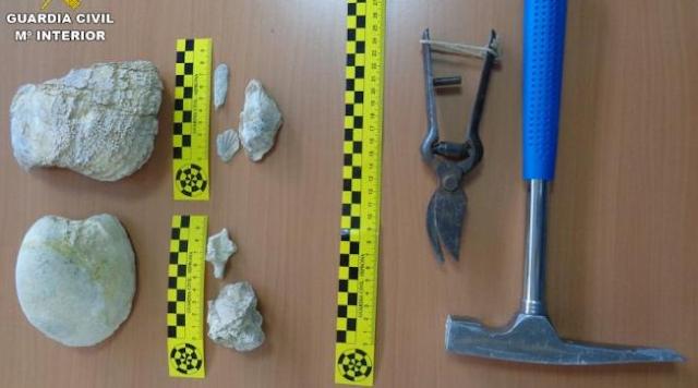 La Guardia Civil se incauta de 19 restos paleontológicos en la Sierra Larga de Elche
