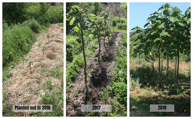 tree planting results