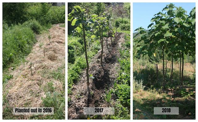 Ergebnisse der Baumpflanzung