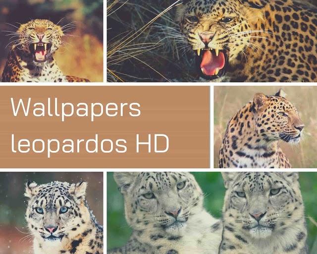 Wallpapers leopardos HD