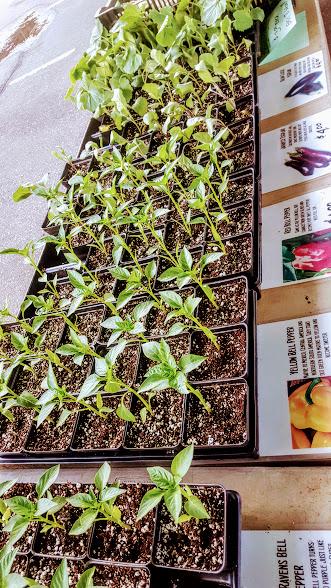 baltimore-farmers-market-herbs