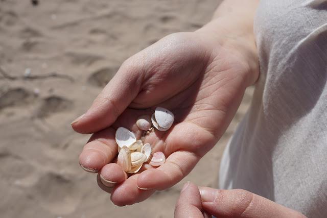 Yyteri simpukka hiekkaranta