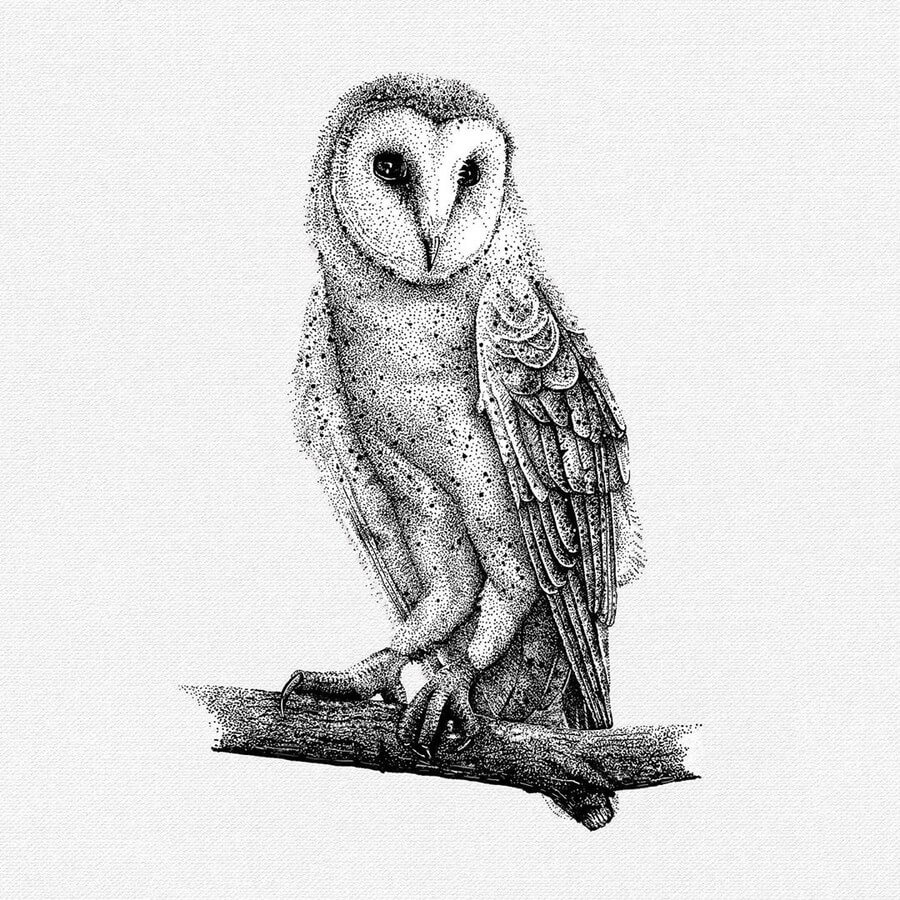 Barn Owl by Last Maps