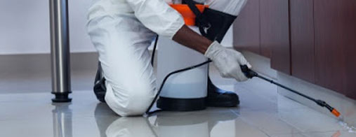 What You Can Do to Make your Home Pest-Proof?