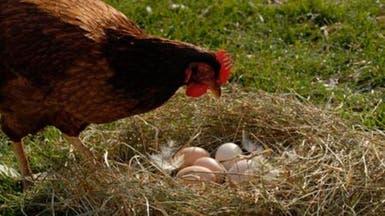 فسيولوجيا إنتاج البيض