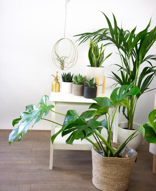 piante d'arredo be green