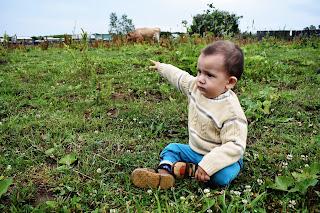 Ребёнок на пастбище с коровами