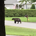 How to Prevent Your Home from Wildlife Invasion
