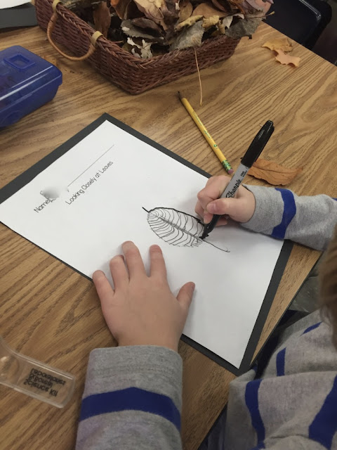 observational drawings of fall leaves