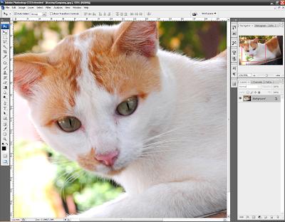 Cara Memperbesar Tampilan Foto
