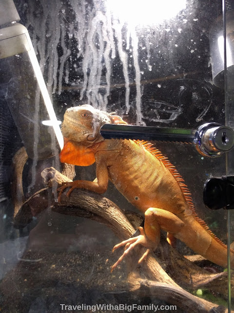 Seeing rare reptiles for sale at the Goldfish Market in Hong Kong