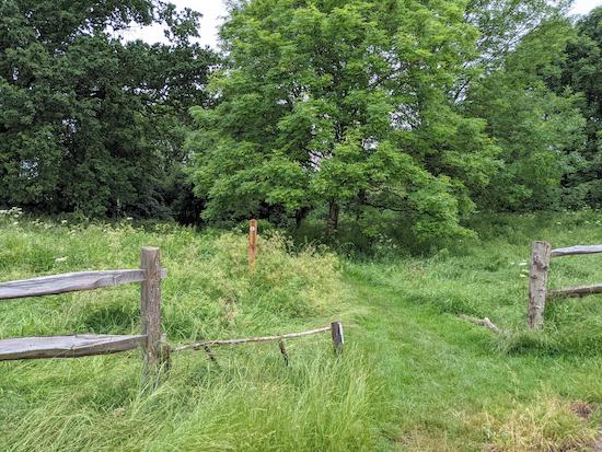 Widford footpath 6 heading NW through woodland