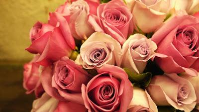 احلى صور ورد,صور ورود جميله,اجمل صور الورد,صور ورد حلوه,أجمل الورود,صور ورد جميل
