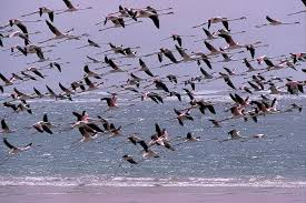 Parc, oiseaux, Djoudj, visite, Saint-Louis, patrimoine, mondial, Unesco, tourisme, sauvage, oiseaux, réserve, île, protection, environnement, nature, écosystème, LEUKSENEGAL, Dakar, Sénégal, Afrique