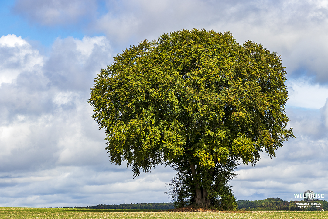 Weite Felder und hohe Bäume. www. WELTREISE.tv
