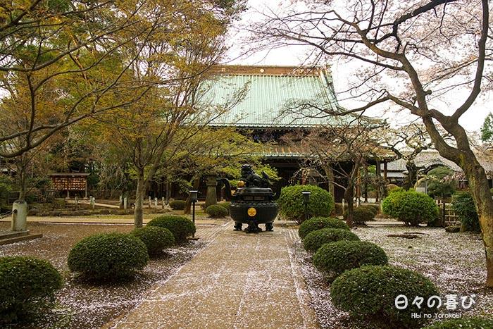 Allée principale du Gotoku-ji sous les cerisiers en fleurs, Setagaya, Tokyo