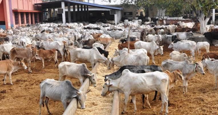Let's talk RUGA aka Fulani Cattle Colonies 1