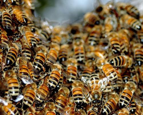 Kisah Menegangkan Sahabat Rasulullah yang Jenazahnya Dilindungi Lebah