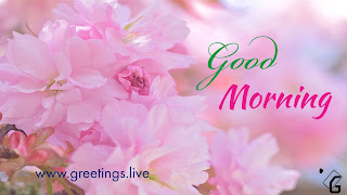 Good-morning-milk-pink-colour-flowers-HD-image
