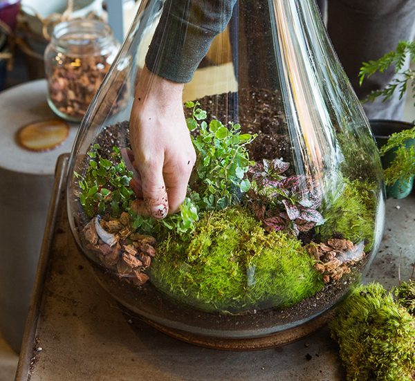 glass bowl terrariums