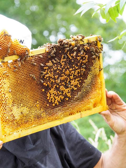 Bijenkasten inspecteren