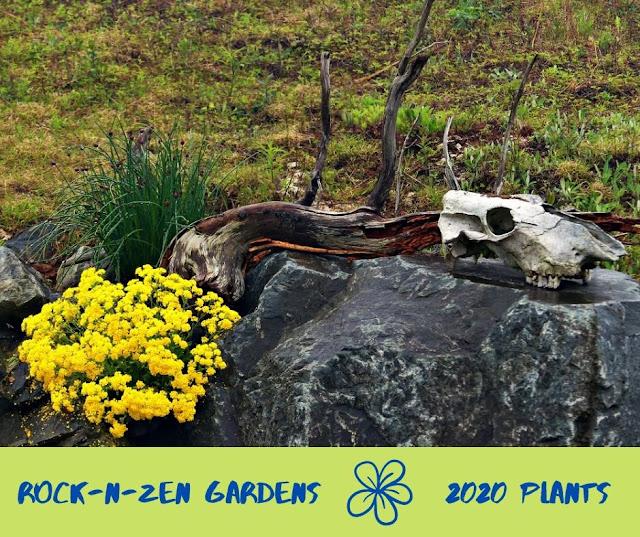 Rock-n-Zen Gardens 2020 Transformation