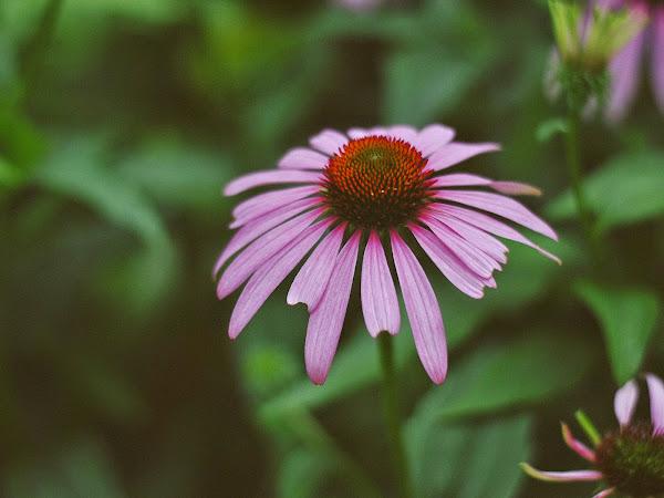 Photo Essay: Summer
