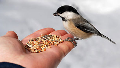 Bird feeding isn't just for children and old people. Take a few minutes to connect with your natural world by feeding the birds. Image frombehappynowbook