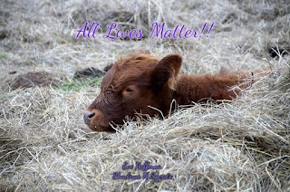 Animals are a secondary source of nutrition. Life does not have to be killed or torture for human consumption.