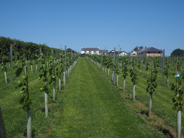 Hotels in South Wales Llanerch Vineyard Hensol Review Wine Tasting