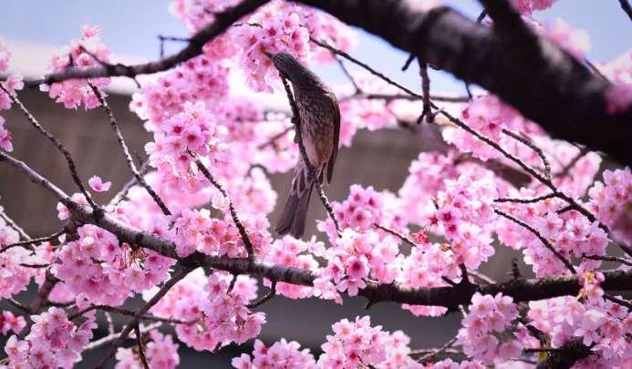 Kata Mutiara Bahasa Jepang Beserta Artinya Terjemahannya