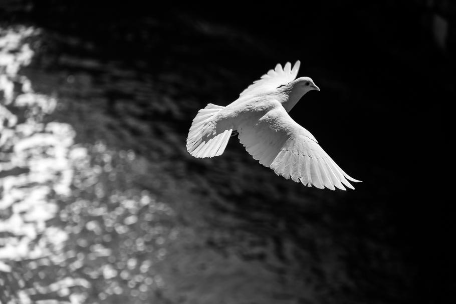 'Lleva paz' de Carlos Larios