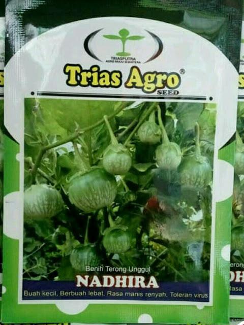 Benih Terong Lalap NADHIRA Produk Trias Agro Seed