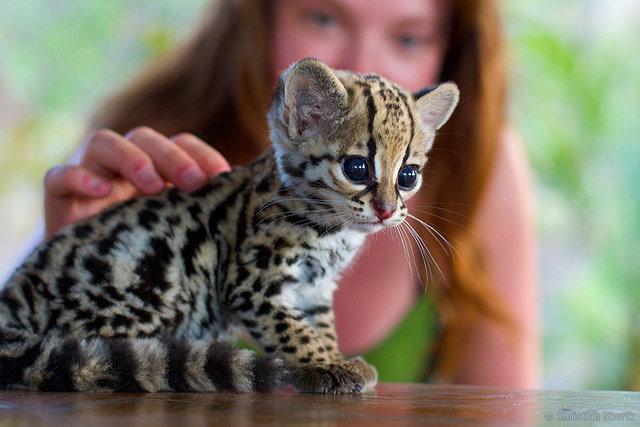 Amazing Creatures 25 Cute Baby Animals 25 Pics