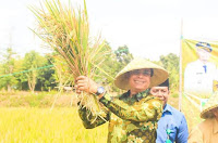 Wakil Walikota Bima Panen Perdana Padi Inpari 32 di Kawasan Pertanian Asakota